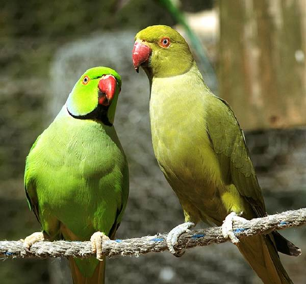 Животный-мир-Индии-Описания-названия-и-виды-животных-Индии-15