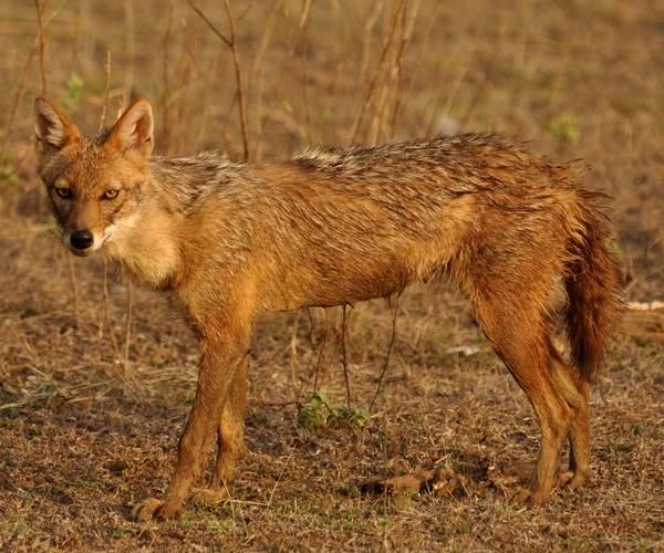 Животный-мир-Индии-Описания-названия-и-виды-животных-Индии-16