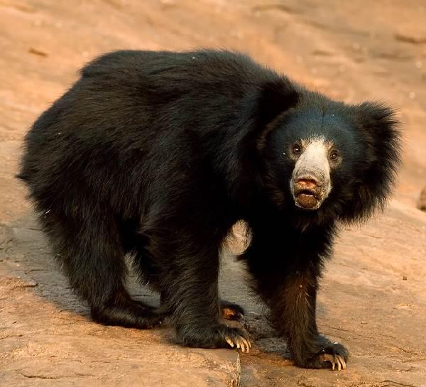 Животный-мир-Индии-Описания-названия-и-виды-животных-Индии-17