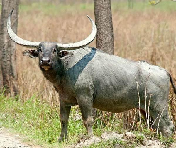 Животный-мир-Индии-Описания-названия-и-виды-животных-Индии-18