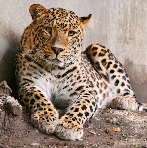 Животный-мир-Индии-Описания-названия-и-виды-животных-Индии-19