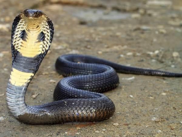 Животный-мир-Индии-Описания-названия-и-виды-животных-Индии-2