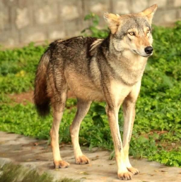 Животный-мир-Индии-Описания-названия-и-виды-животных-Индии-20