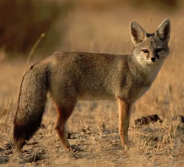 Животный-мир-Индии-Описания-названия-и-виды-животных-Индии-24