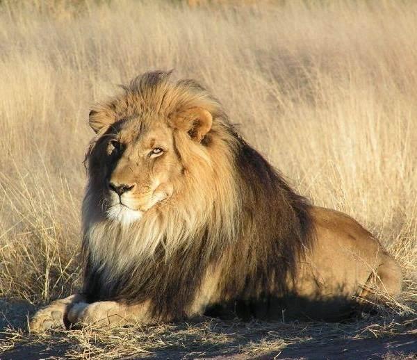 Животный-мир-Индии-Описания-названия-и-виды-животных-Индии-3