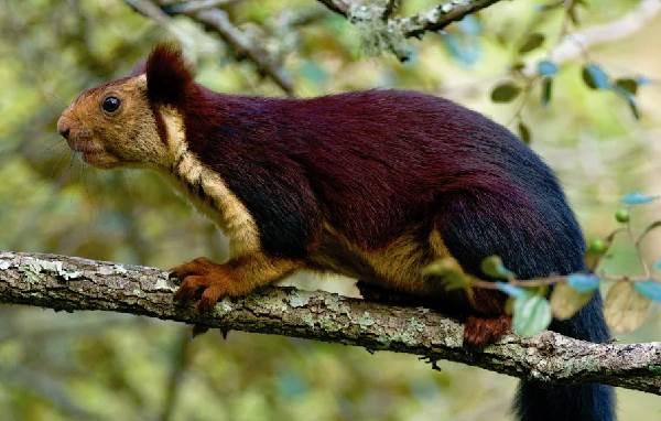 Животный-мир-Индии-Описания-названия-и-виды-животных-Индии-4