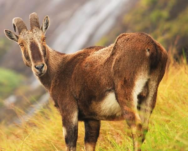 Животный-мир-Индии-Описания-названия-и-виды-животных-Индии-5