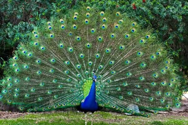 Животный-мир-Индии-Описания-названия-и-виды-животных-Индии-6