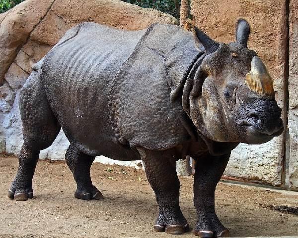 Животный-мир-Индии-Описания-названия-и-виды-животных-Индии-8