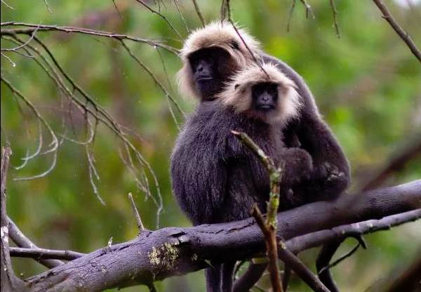 Животный-мир-Индии-Описания-названия-и-виды-животных-Индии-9