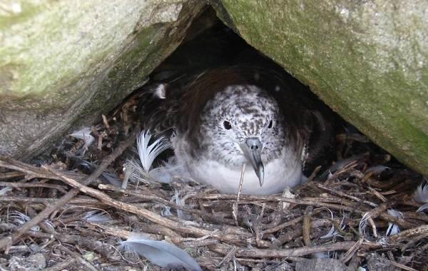Буревестник-птица-Описание-особенности-виды-образ-жизни-и-среда-обитания-буревестника-14