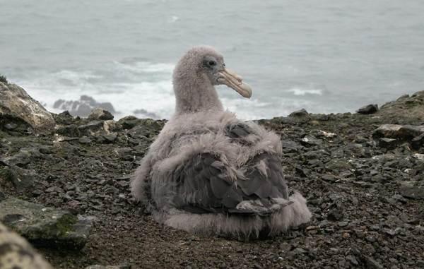 Буревестник-птица-Описание-особенности-виды-образ-жизни-и-среда-обитания-буревестника-15