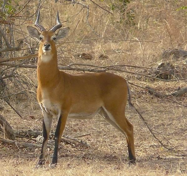 Джейран-животное-Описание-особенности-виды-образ-жизни-и-среда-обитания-джейрана-4