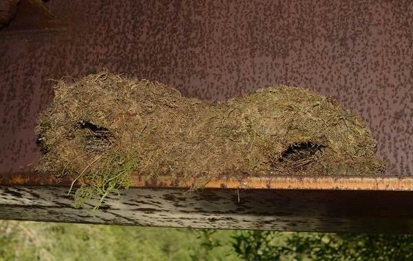Оляпка-птица-Описание-особенности-виды-образ-жизни-и-среда-обитания-оляпки-13