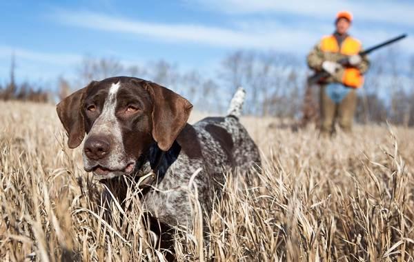 Охотничьи-породы-собак-Описания-названия-и-виды-охотничьих-собак-1