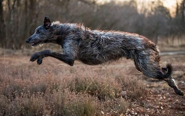 Охотничьи-породы-собак-Описания-названия-и-виды-охотничьих-собак-20