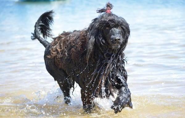 Охотничьи-породы-собак-Описания-названия-и-виды-охотничьих-собак-57