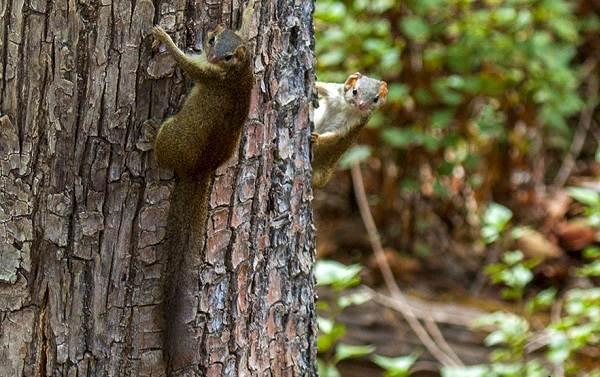 Тупайя-животное-Описание-особенности-виды-образ-жизни-и-среда-обитания-тупайи-13