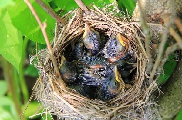Галка-птица-Описание-особенности-виды-образ-жизни-и-среда-обитания-галки-14