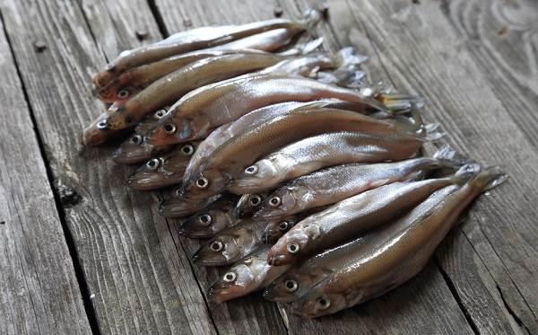 Корюшка-рыба-Описание-особенности-виды-образ-жизни-и-среда-обитания-корюшки-8