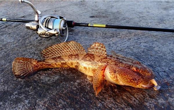Рыба-бычок-Описание-особенности-виды-образ-жизни-и-среда-обитания-рыбы-бычок-14