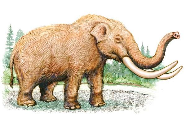 Слон-животное-Описание-особенности-виды-образ-жизни-и-среда-обитания-слона-18