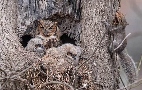 Сова-птица-Описание-особенности-виды-образ-жизни-и-среда-обитания-совы-16