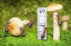 Муравей насекомое. Описание, особенности, виды, образ жизни и среда обитания муравья