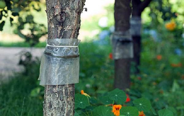 Муравей-насекомое-Описание-особенности-виды-образ-жизни-и-среда-обитания-муравья-24