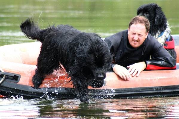 Ньюфаундленд-собака-Описание-особенности-виды-уход-и-цена-породы-8