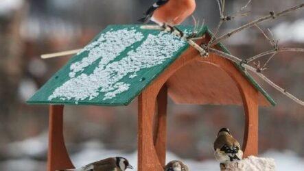Оседлые птицы. Описание, названия, виды и фото оседлых птиц