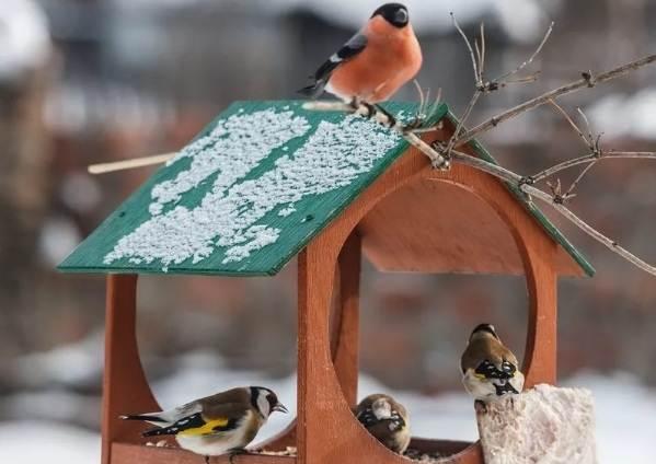 Оседлые-птицы-Описание-названия-виды-и-фото-оседлых-птиц-1