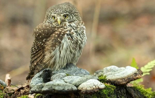 Оседлые-птицы-Описание-названия-виды-и-фото-оседлых-птиц-10