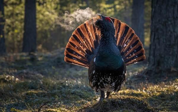 Оседлые-птицы-Описание-названия-виды-и-фото-оседлых-птиц-11