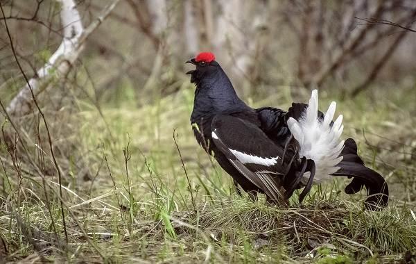 Оседлые-птицы-Описание-названия-виды-и-фото-оседлых-птиц-12