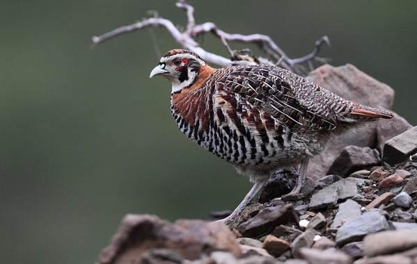 Оседлые-птицы-Описание-названия-виды-и-фото-оседлых-птиц-17