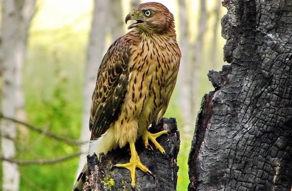 Оседлые-птицы-Описание-названия-виды-и-фото-оседлых-птиц-2