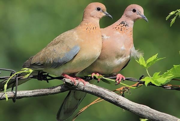 Оседлые-птицы-Описание-названия-виды-и-фото-оседлых-птиц-21