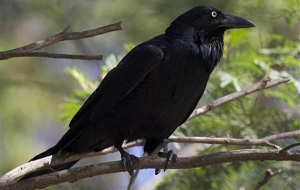 Оседлые-птицы-Описание-названия-виды-и-фото-оседлых-птиц-26