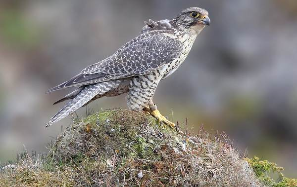 Оседлые-птицы-Описание-названия-виды-и-фото-оседлых-птиц-3