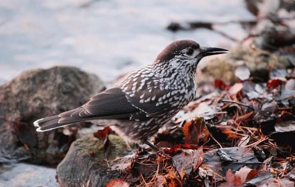Оседлые-птицы-Описание-названия-виды-и-фото-оседлых-птиц-31