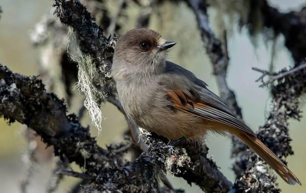 Оседлые-птицы-Описание-названия-виды-и-фото-оседлых-птиц-32