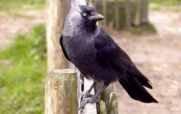 Оседлые-птицы-Описание-названия-виды-и-фото-оседлых-птиц-33