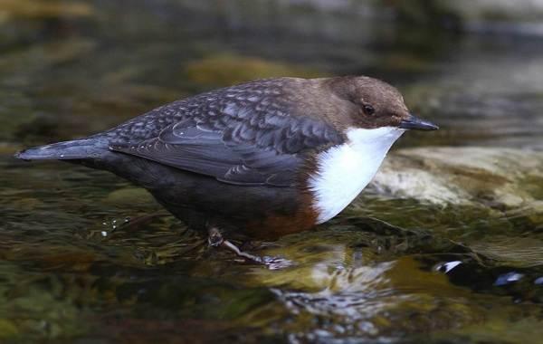 Оседлые-птицы-Описание-названия-виды-и-фото-оседлых-птиц-34