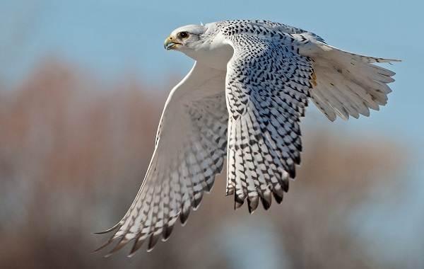 Оседлые-птицы-Описание-названия-виды-и-фото-оседлых-птиц-4