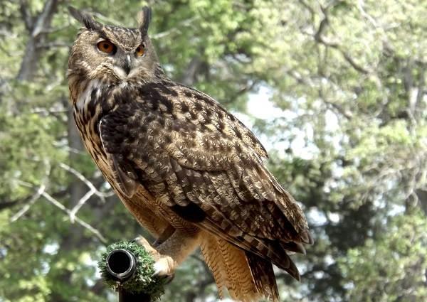 Оседлые-птицы-Описание-названия-виды-и-фото-оседлых-птиц-6