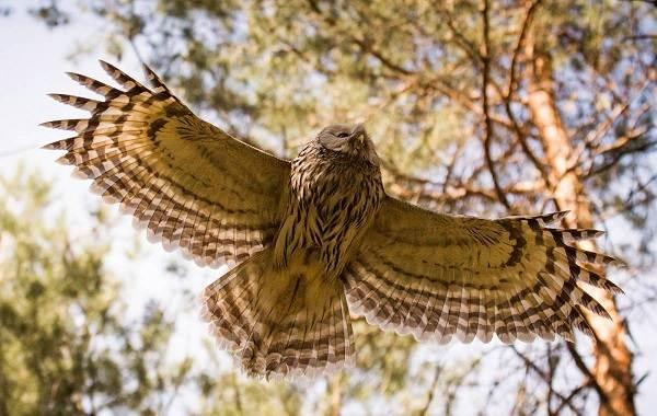 Оседлые-птицы-Описание-названия-виды-и-фото-оседлых-птиц-8