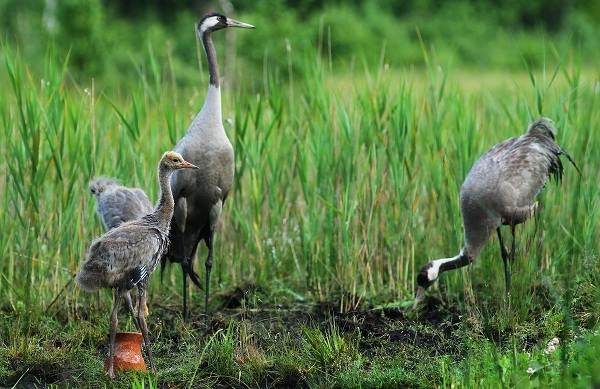 Птицы-Татарстана-Описание-названия-виды-и-фото-птиц-Татарстана-1