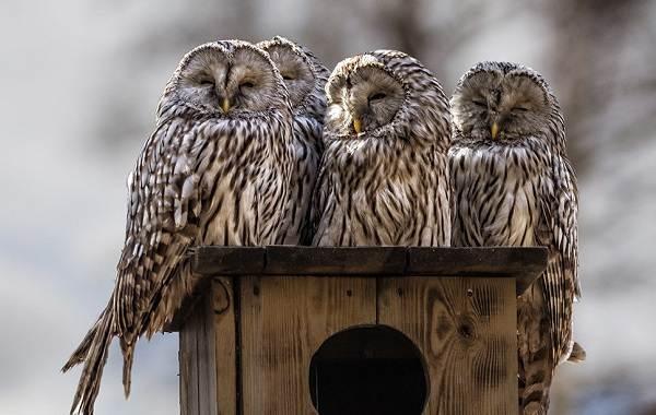 Птицы-Татарстана-Описание-названия-виды-и-фото-птиц-Татарстана-10