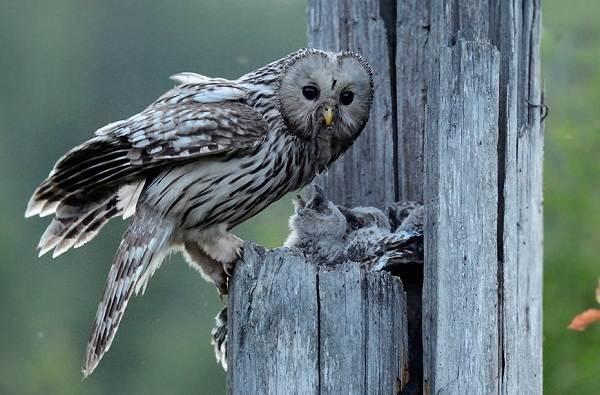 Птицы-Татарстана-Описание-названия-виды-и-фото-птиц-Татарстана-11